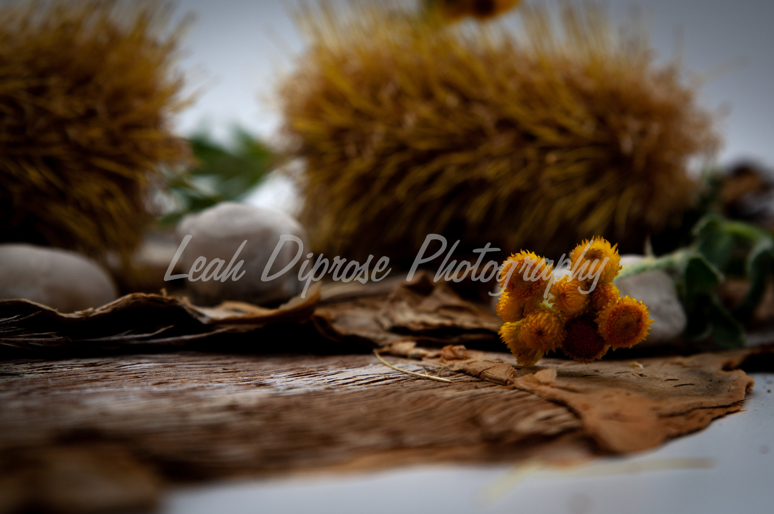 Leah Diprose Photography image-1581.jpg