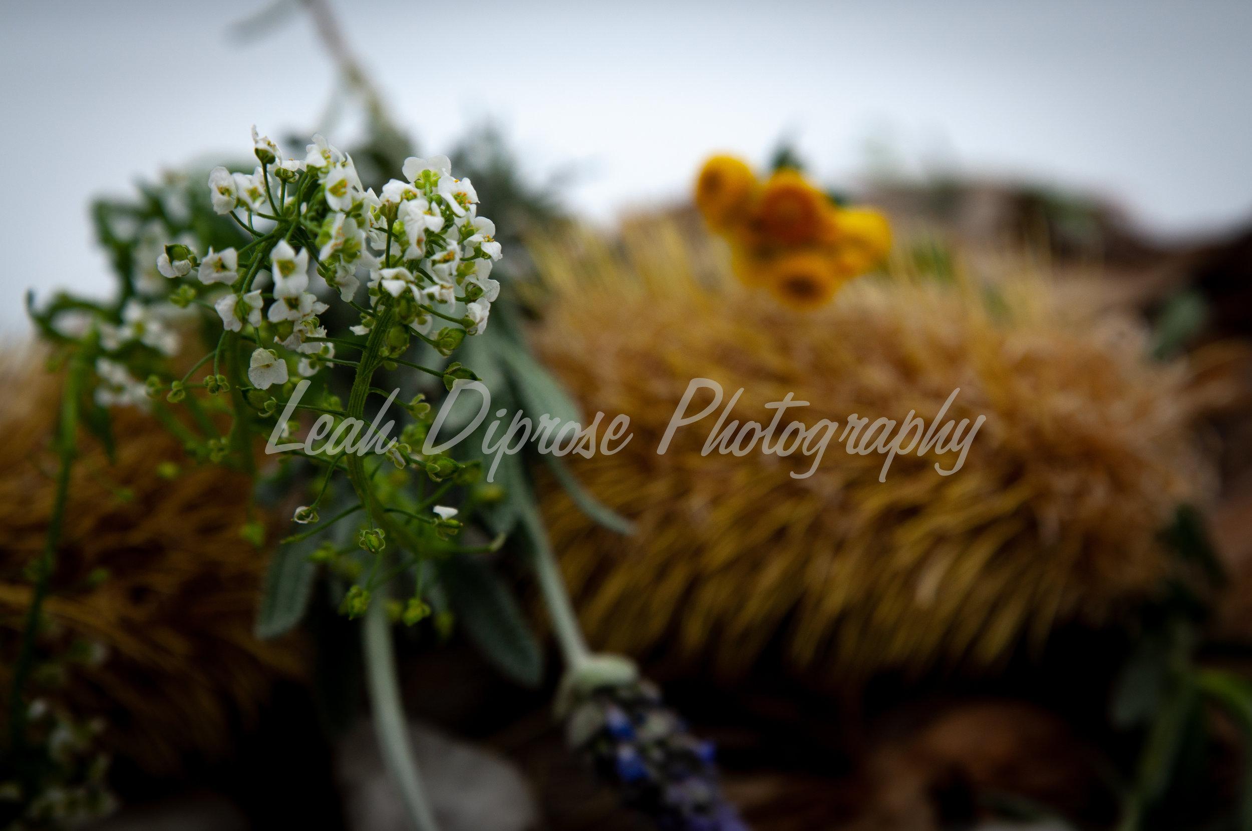 Leah Diprose Photography image-1593.jpg
