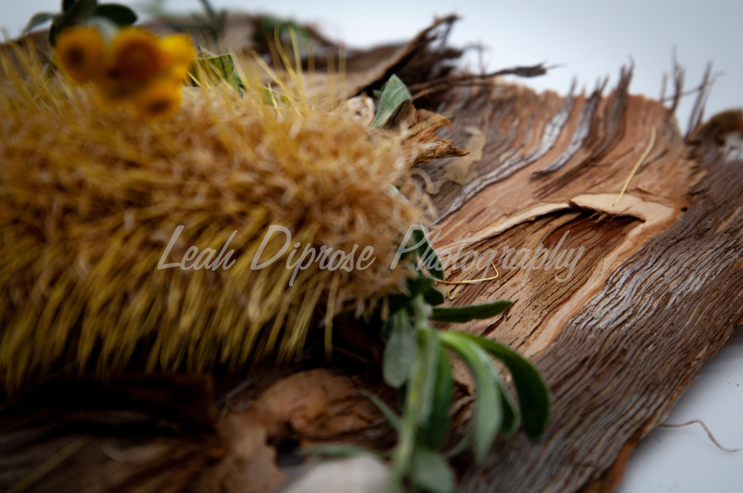 Leah Diprose Photography image-1585.jpg