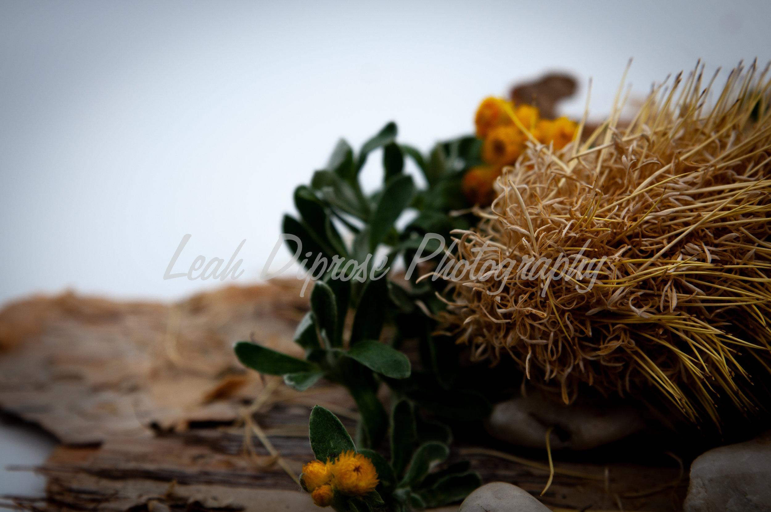 Leah Diprose Photography image-1588.jpg