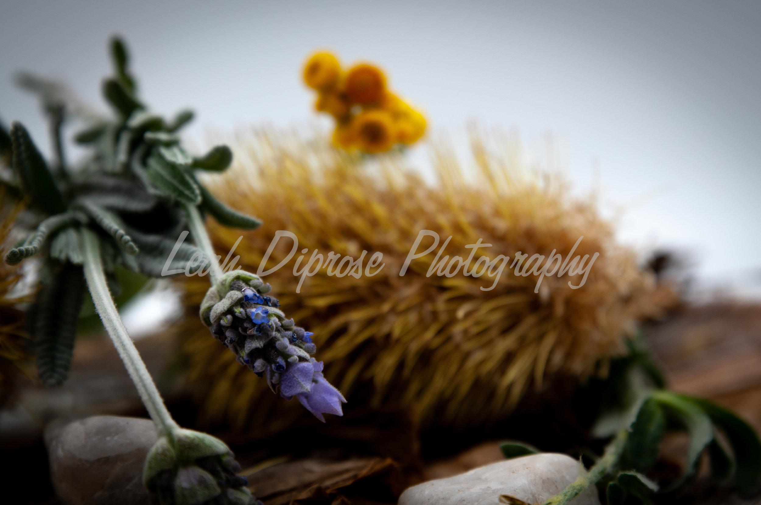Leah Diprose Photography image-1591.jpg