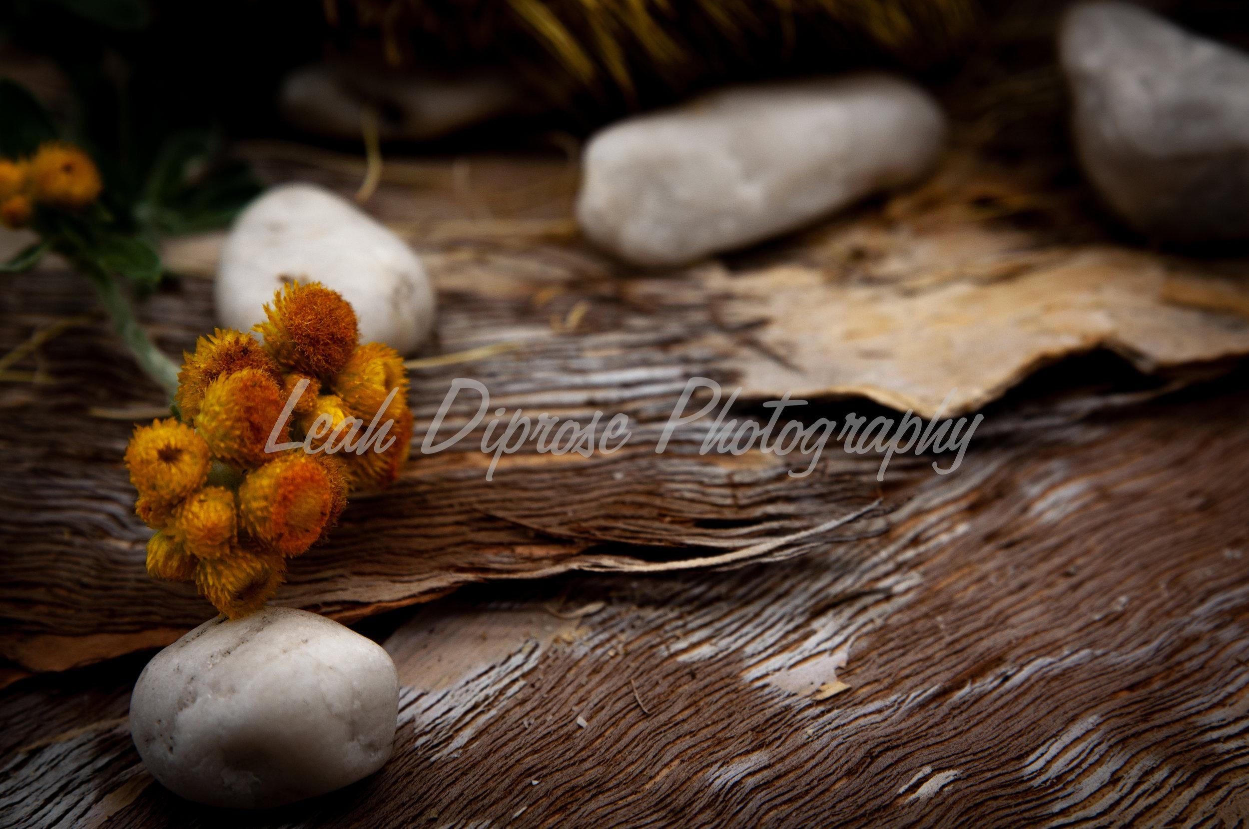 Leah Diprose Photography image-1590.jpg