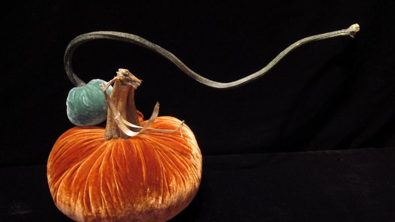 hot skwash velvet pumpkins orange and blue.jpg