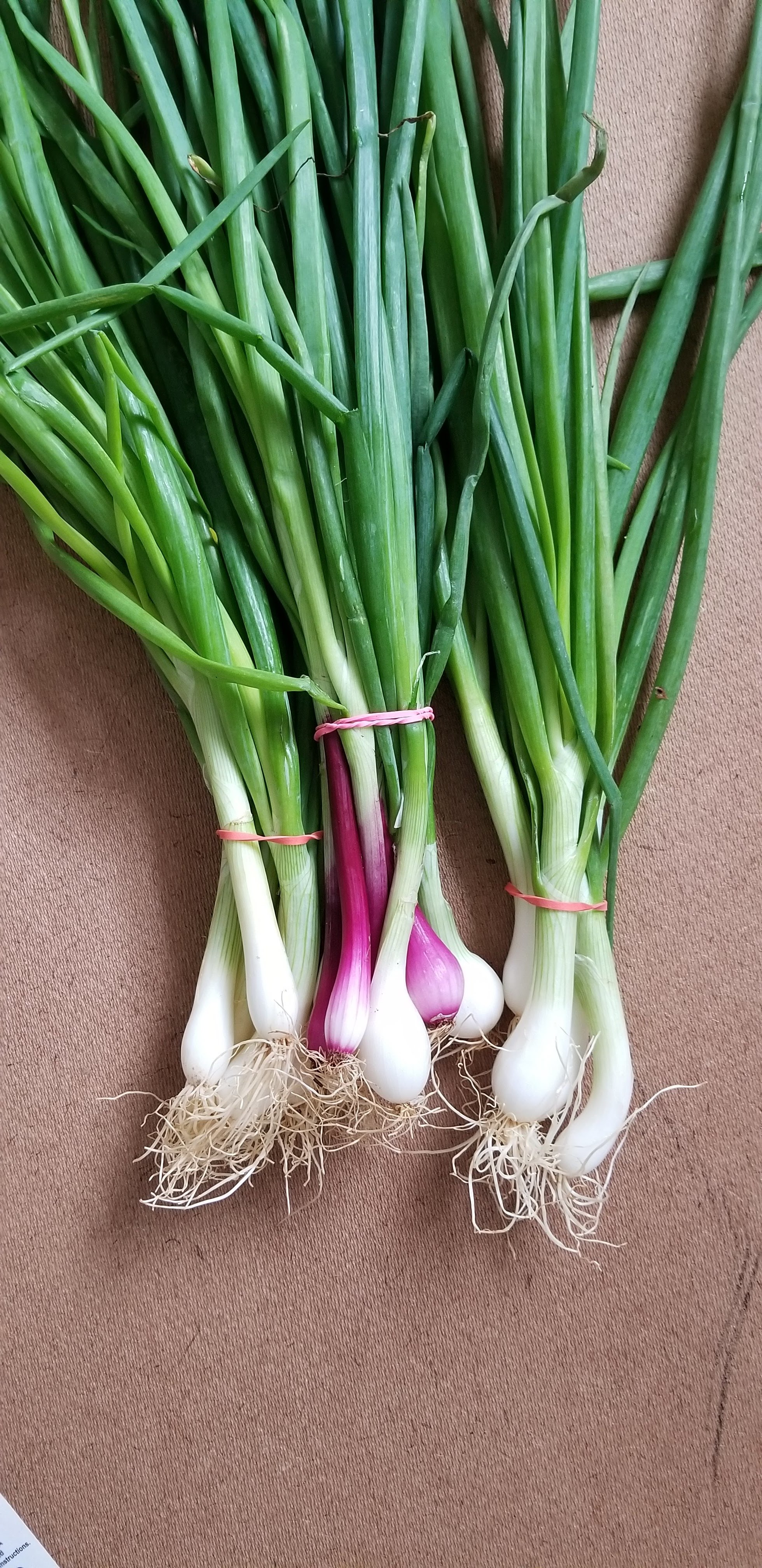 We picked these green onions up fresh from the farmers market.