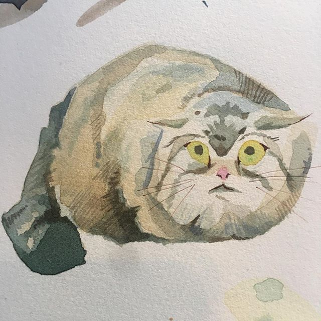 pallas cat doodle (not from life) . #illustration #watercolor #pallascat #sketch #painting