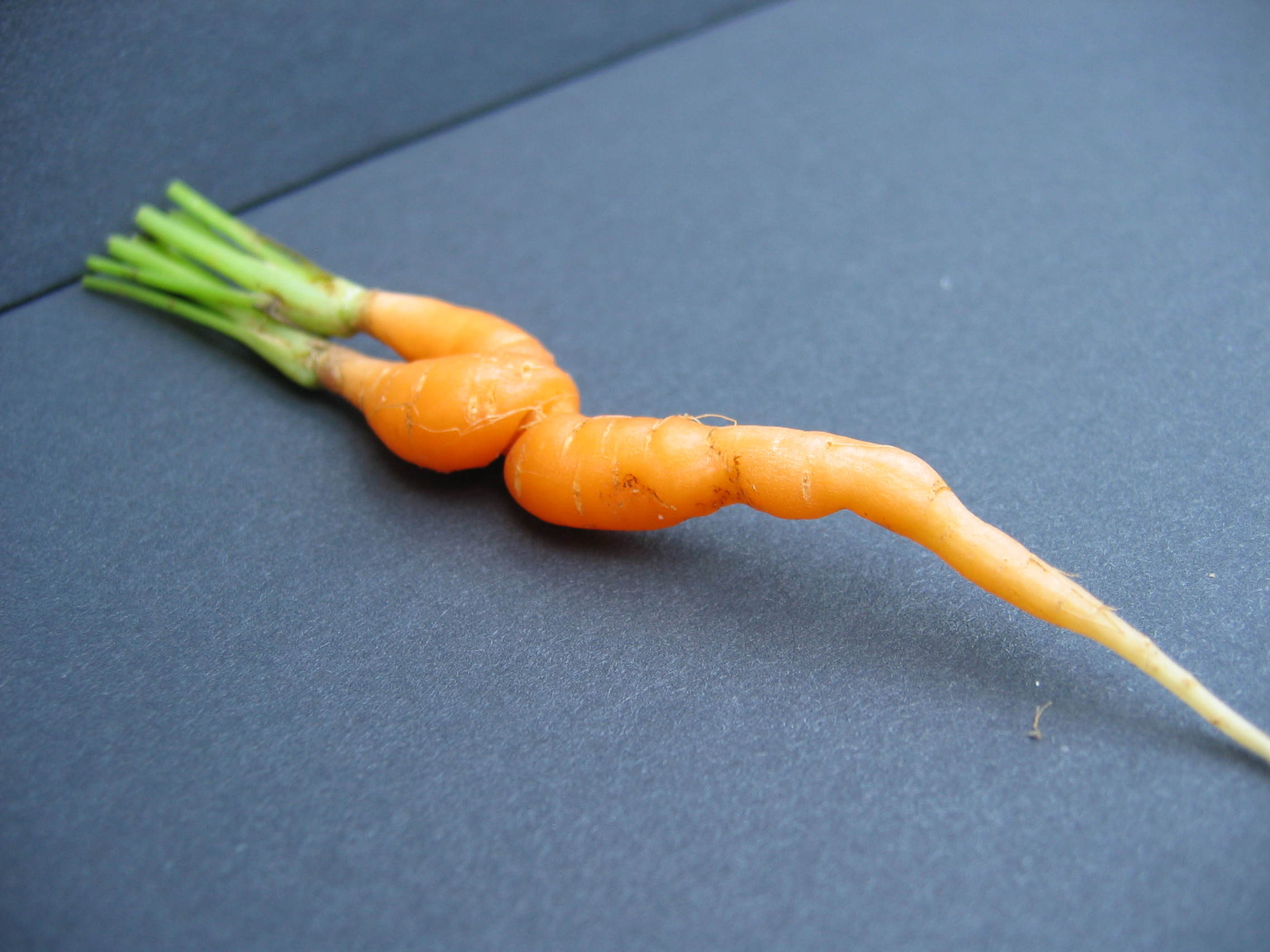 SEDUCTIVE CARROTS BE LIKE, EAT ME