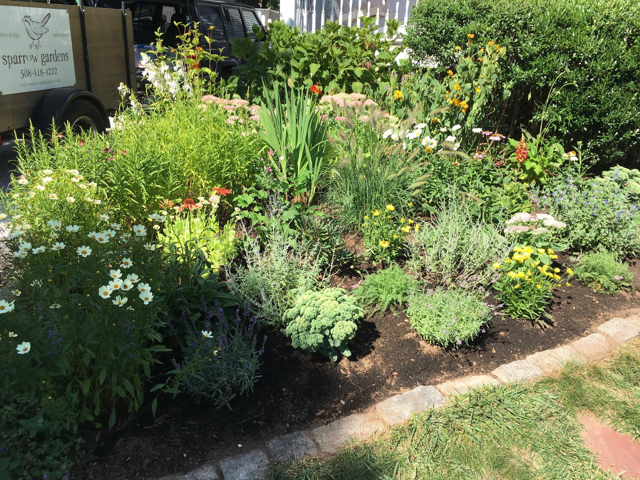 Garden rehabilitation. View gallery (2)