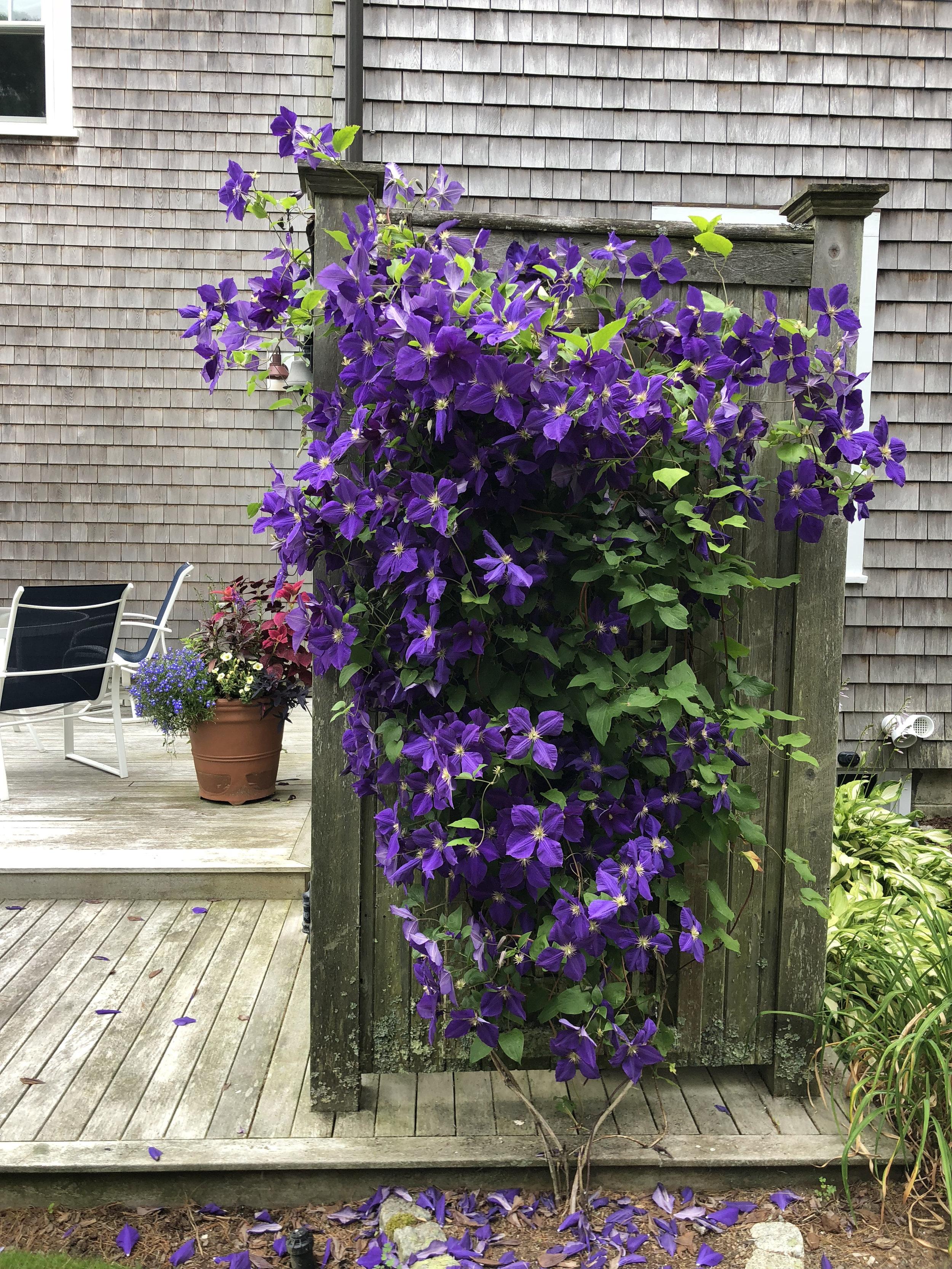 A garden in Dennis. View gallery (6)