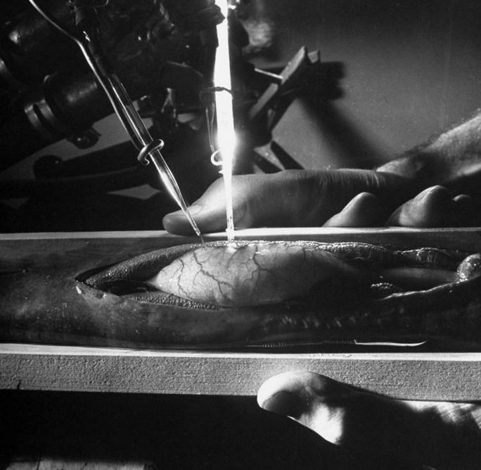 Quartz-and-Frog-Organs-Fritz-Goro.png