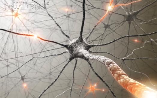 Neuron 3 getty.jpeg