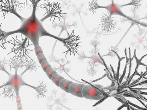 Neuron 4 getty.jpeg
