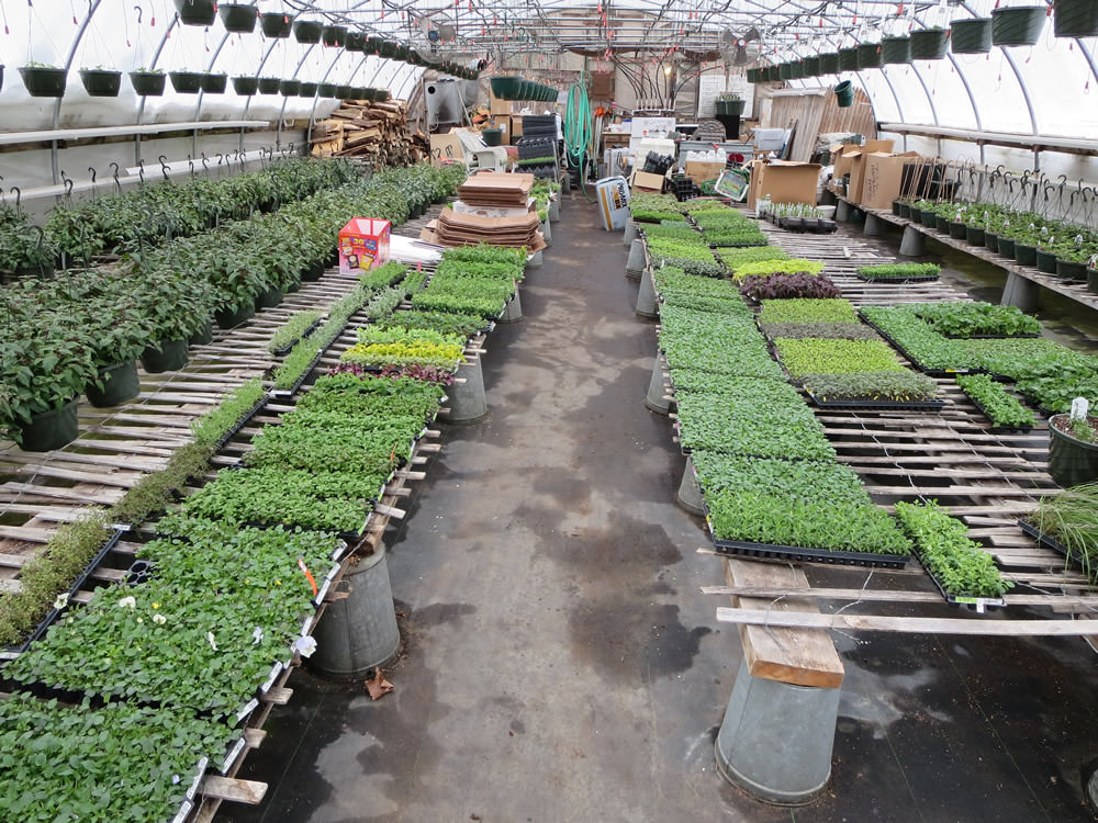 Greenhouse 2014 006.jpg