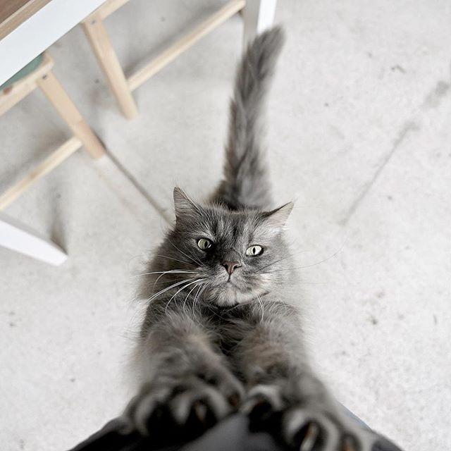 Feed me, Hooman.... 🐱🍔🌮🍣