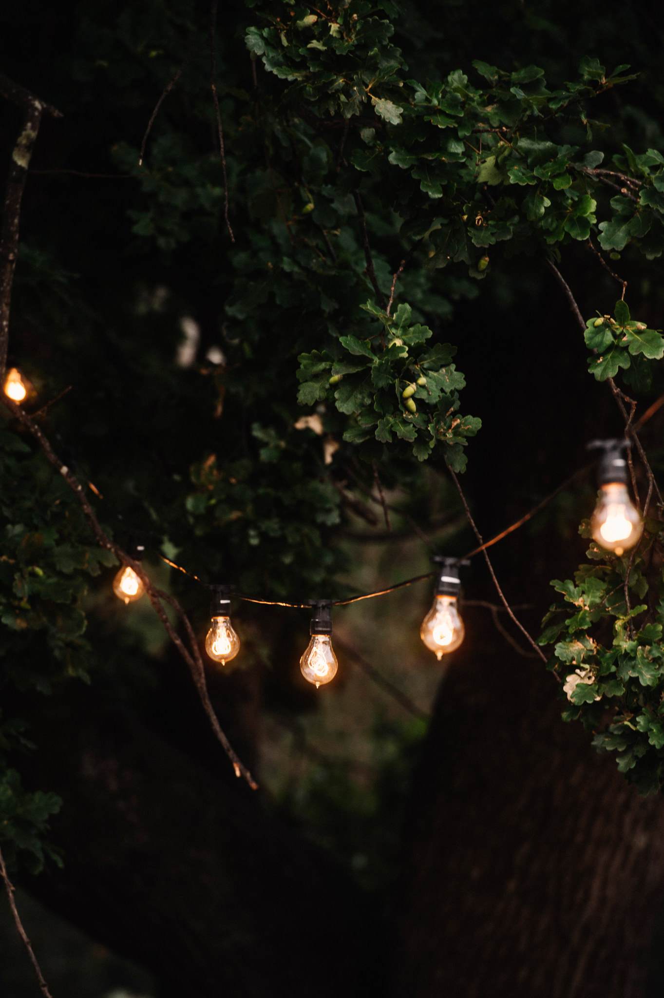 Festoon lighting in the trees around the marquee at Entally Estate