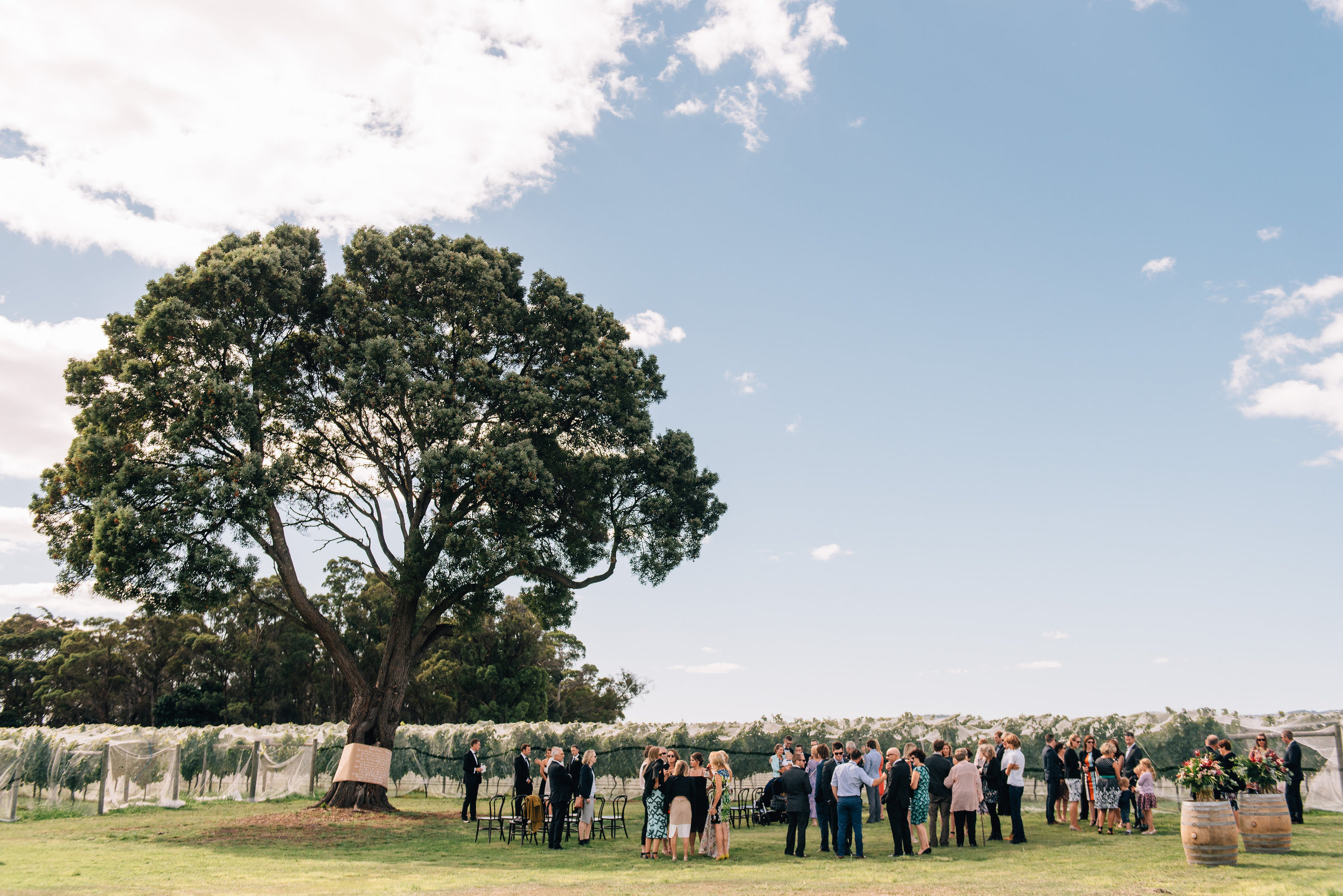 Goaty Hill wedding under their blackwood tree