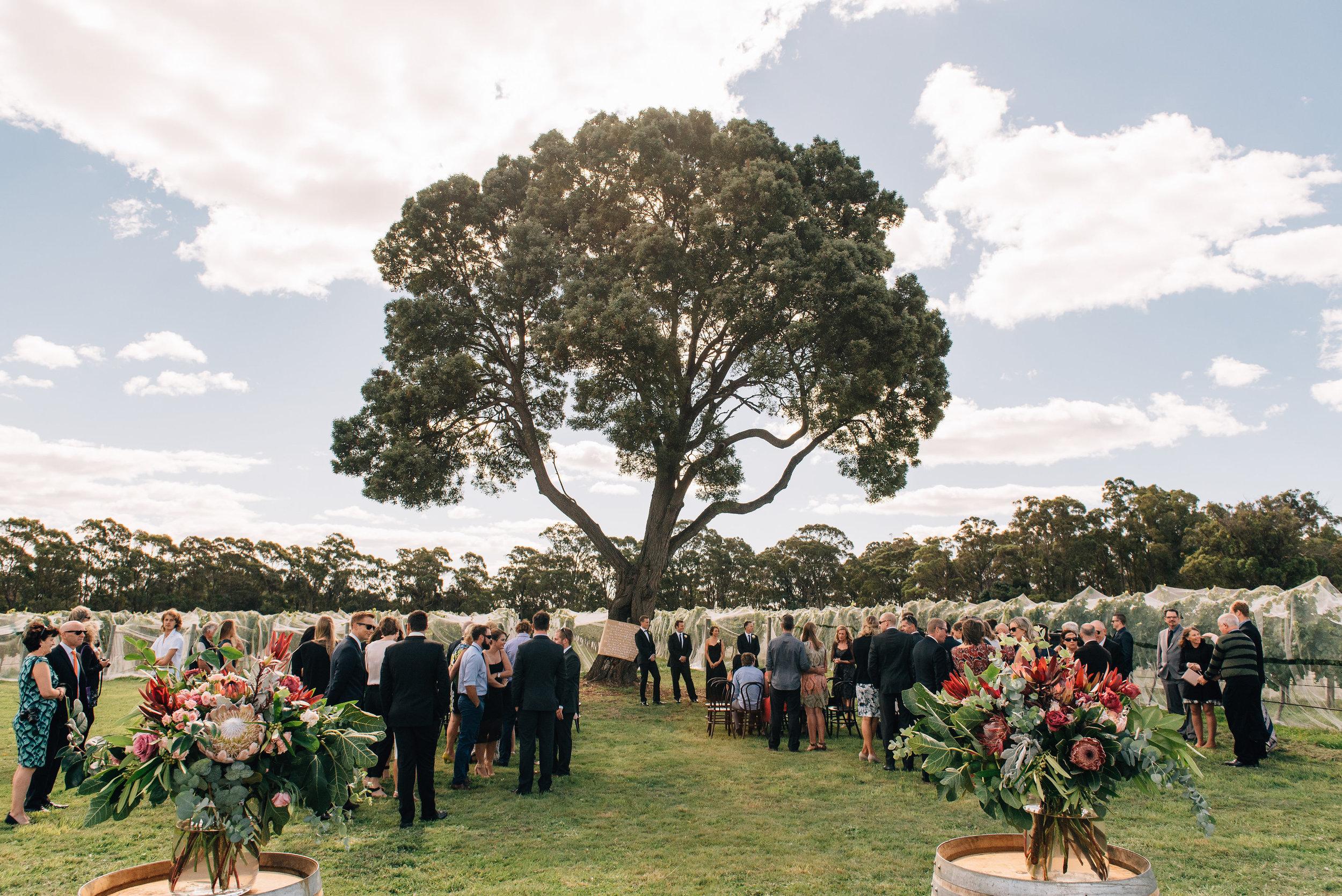 Wedding under the blackwood tree at Goaty Hill winery