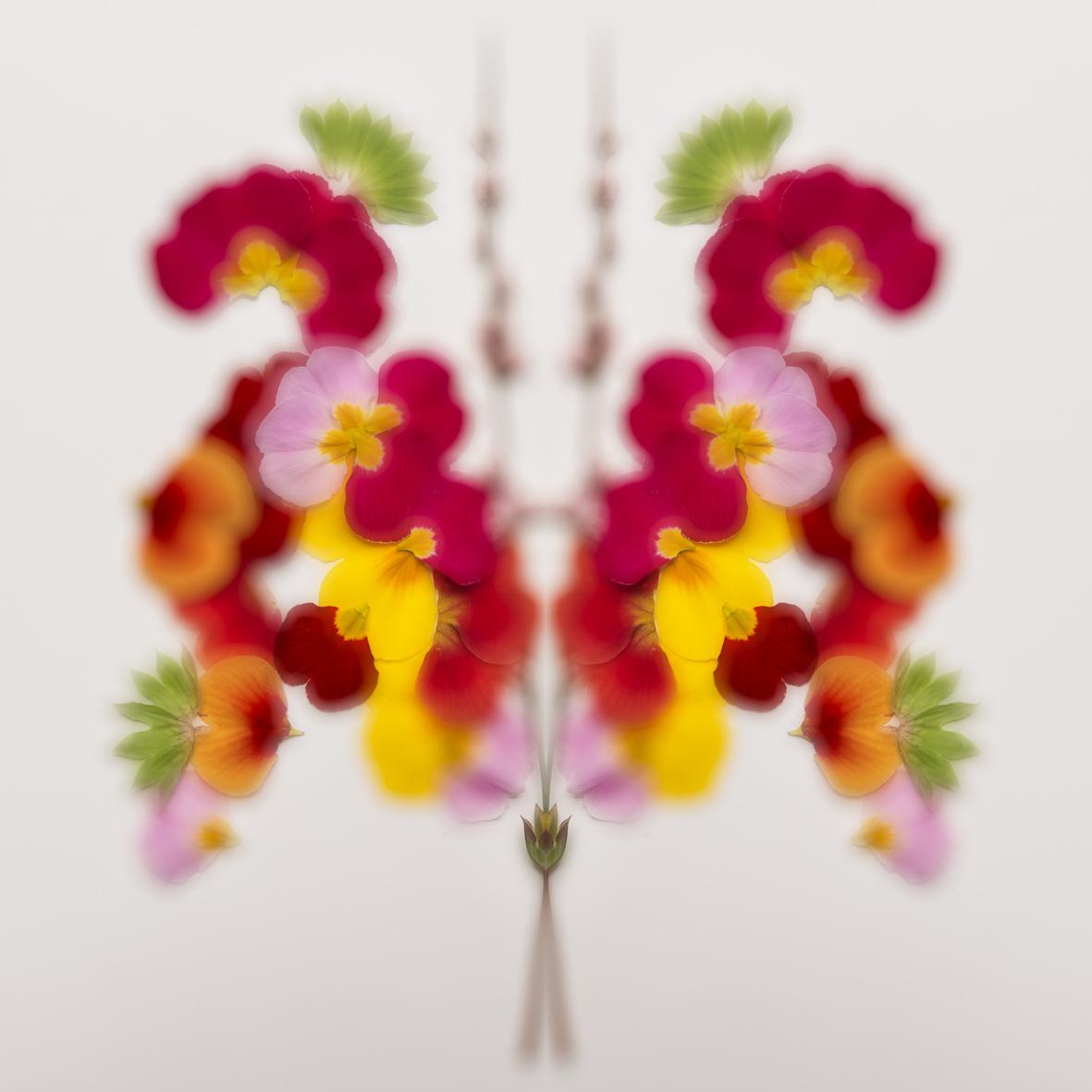 Rorschach Blumen 1.jpg