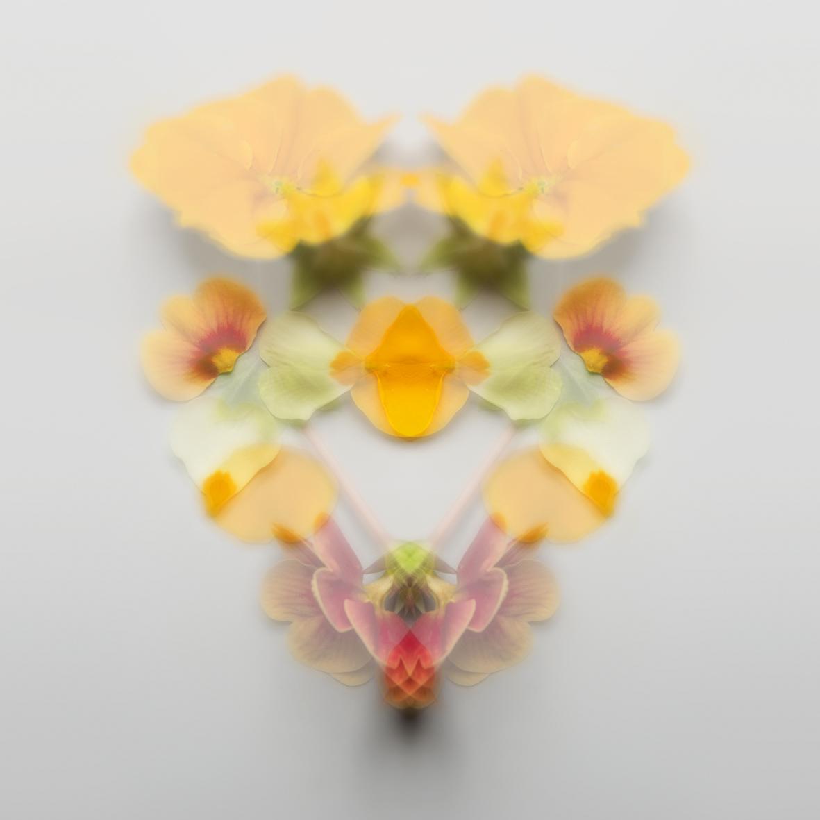 Rorschach Blumen 4.jpg