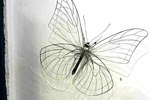 Insektenskulpturen von jörg rohner in zug.