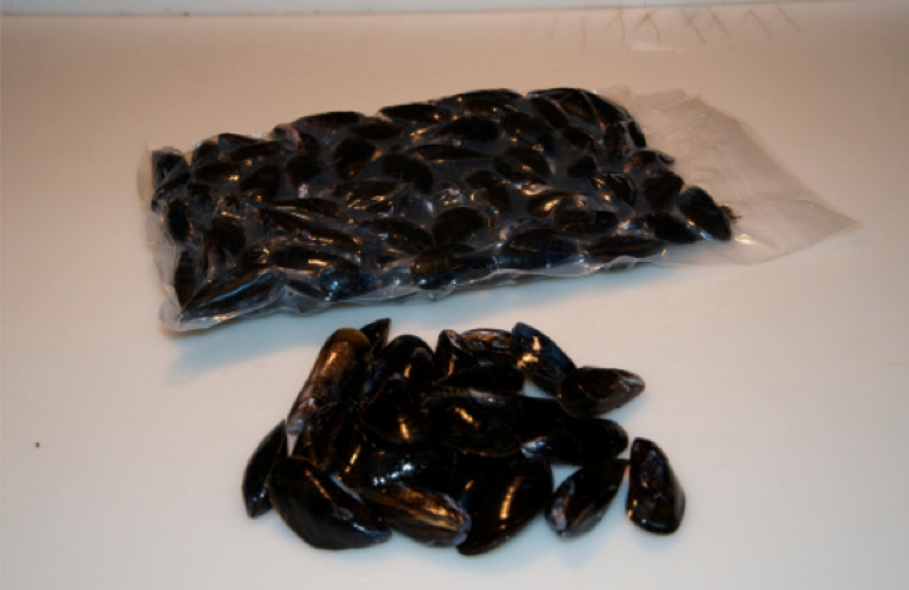 blue mussels 1.png