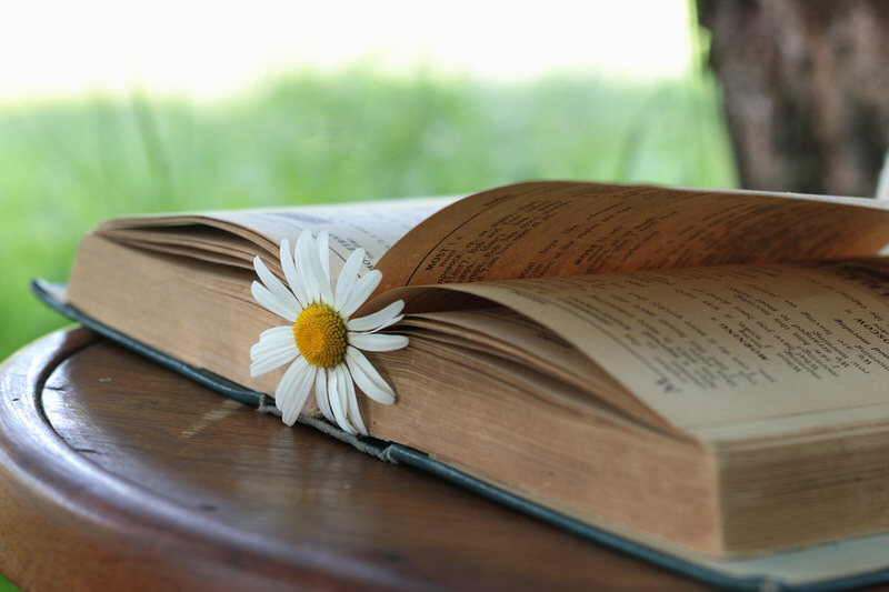 daisy on an open book
