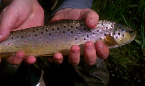 fly-fishing-the-fly-factor-guide-trout-1.jpg