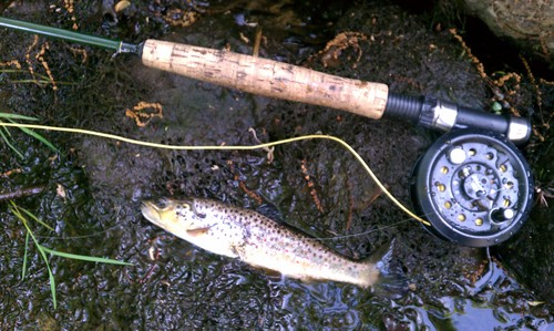 fly-fishing-the-fly-factor-trout-1.jpg
