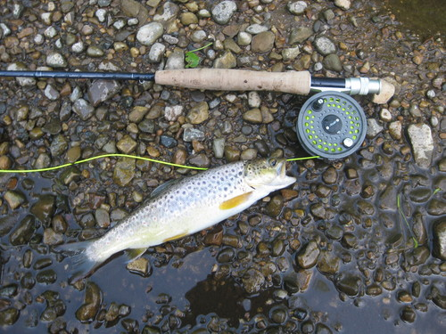 fly-fishing-the-fly-factor-trout-river-2.jpg
