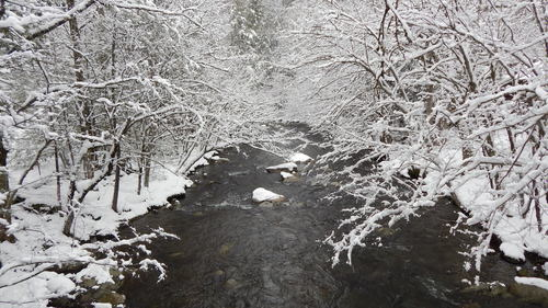 fly-fishing-the-fly-factor-wildlife-river-winter-snow.jpg