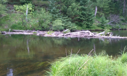 fly-fishing-the-fly-factor-wildlife-river.jpg