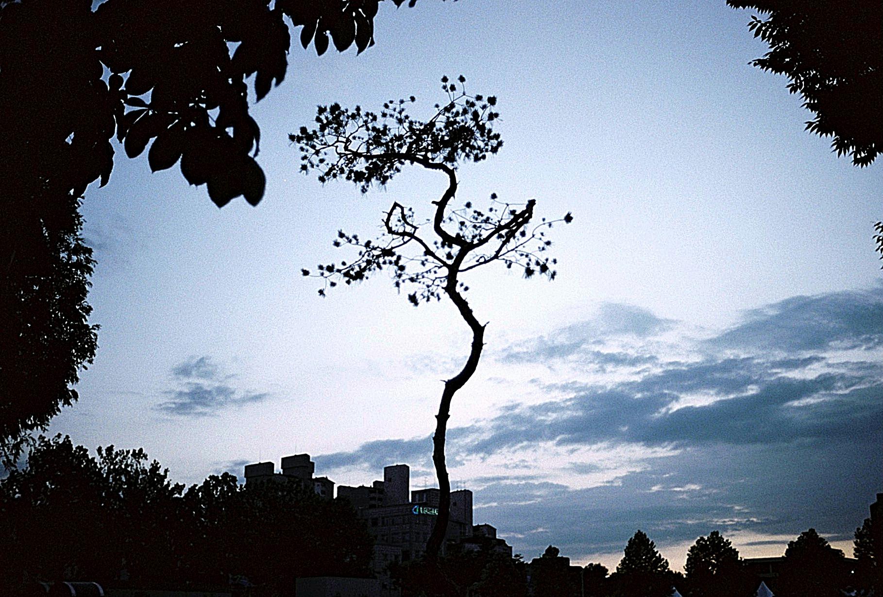Yonsei, Seoul, South Korea (2010)