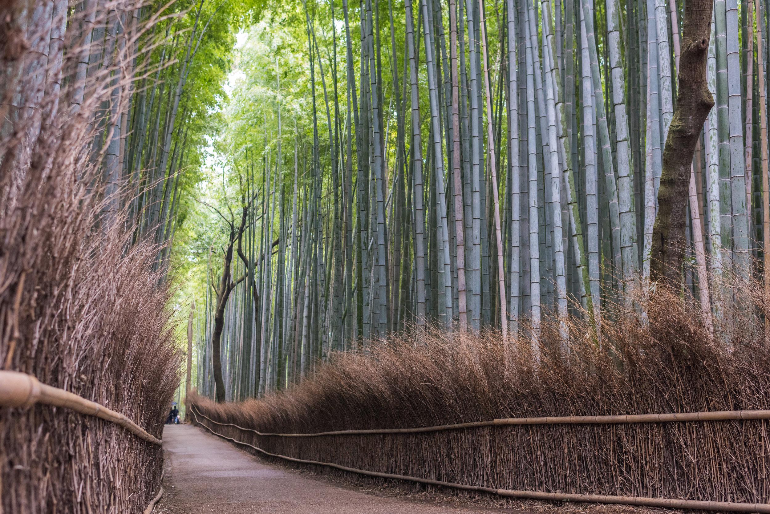 Arashiyama, Japan (2019)