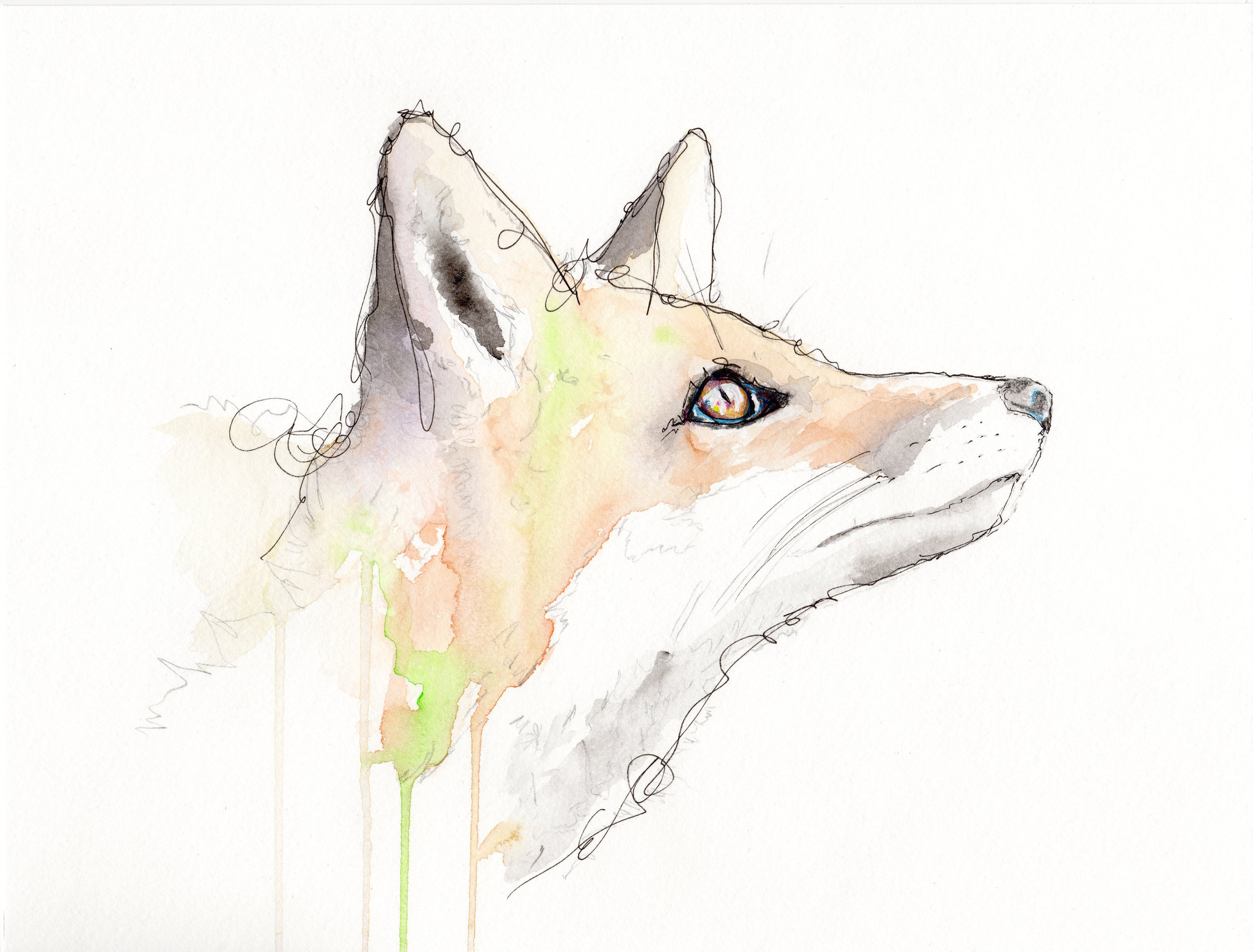 Fox of Zao.jpg