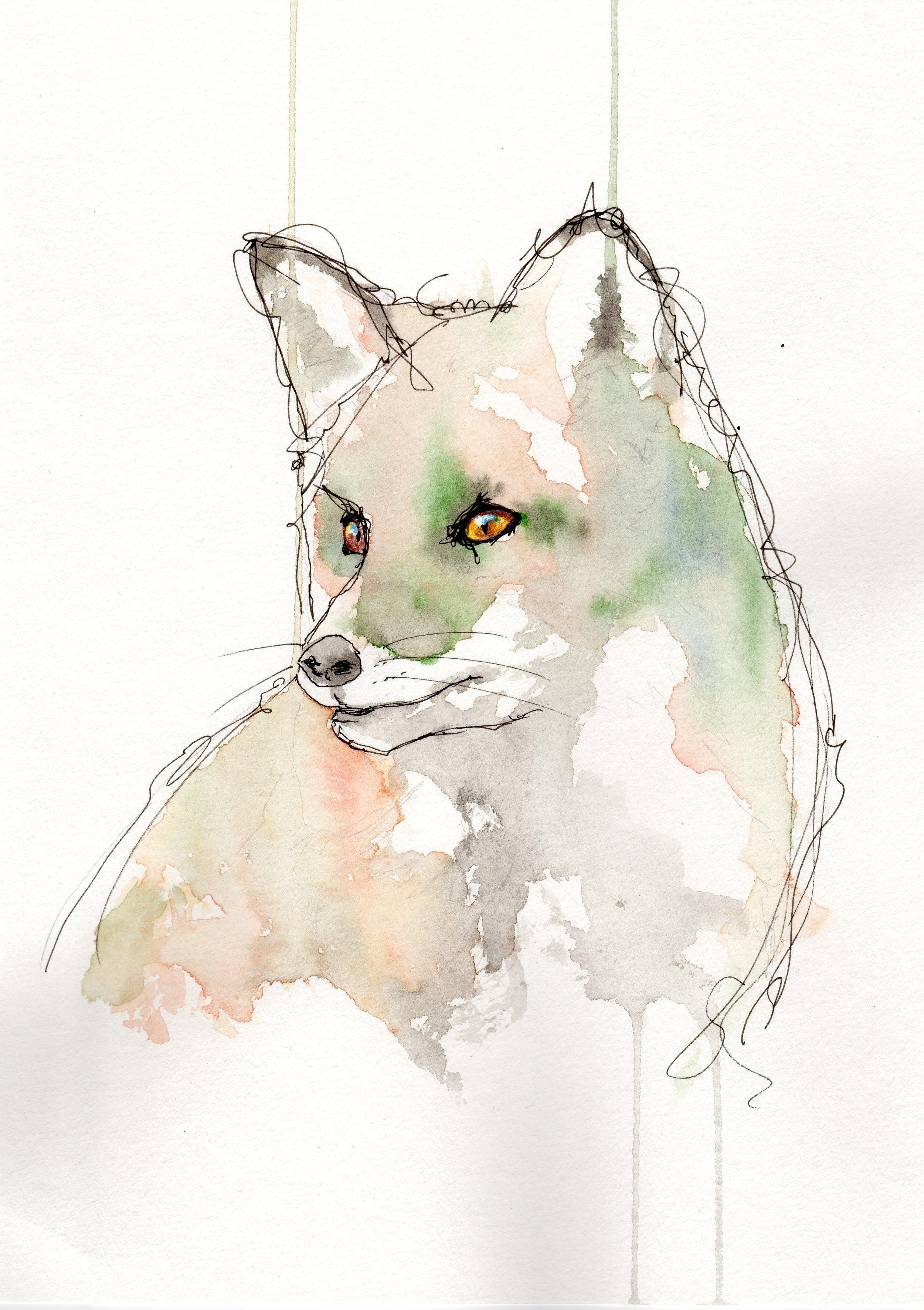 true fox.jpg