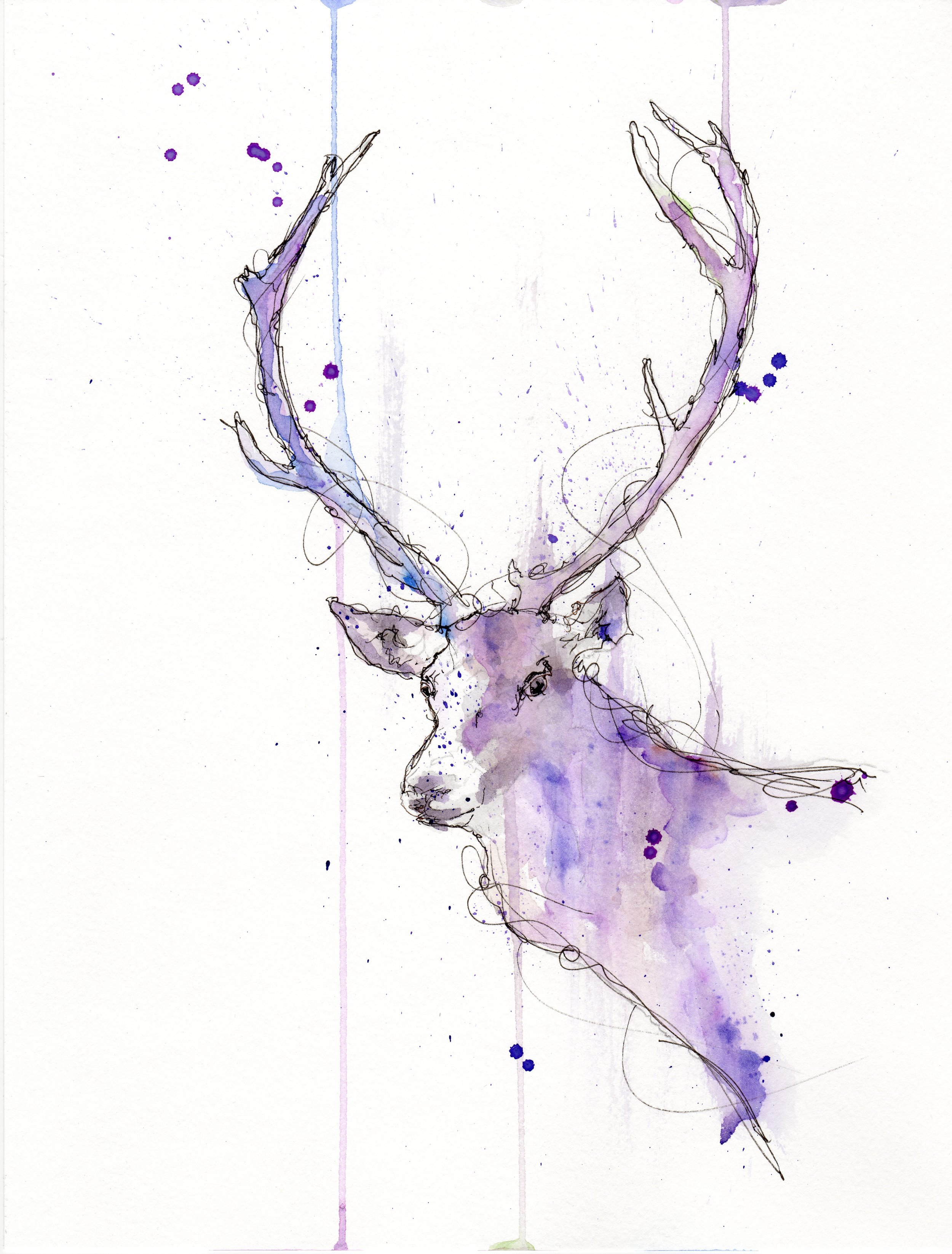 violet stag.jpg