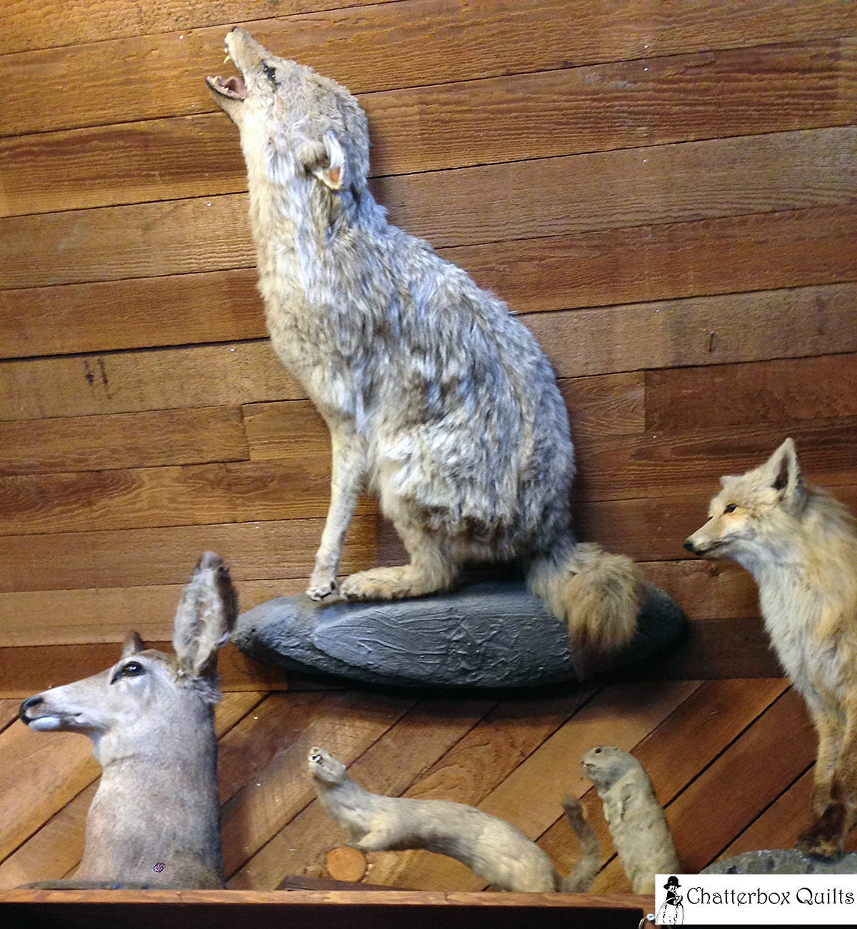 Some of the varmints in the Indian Trading Post