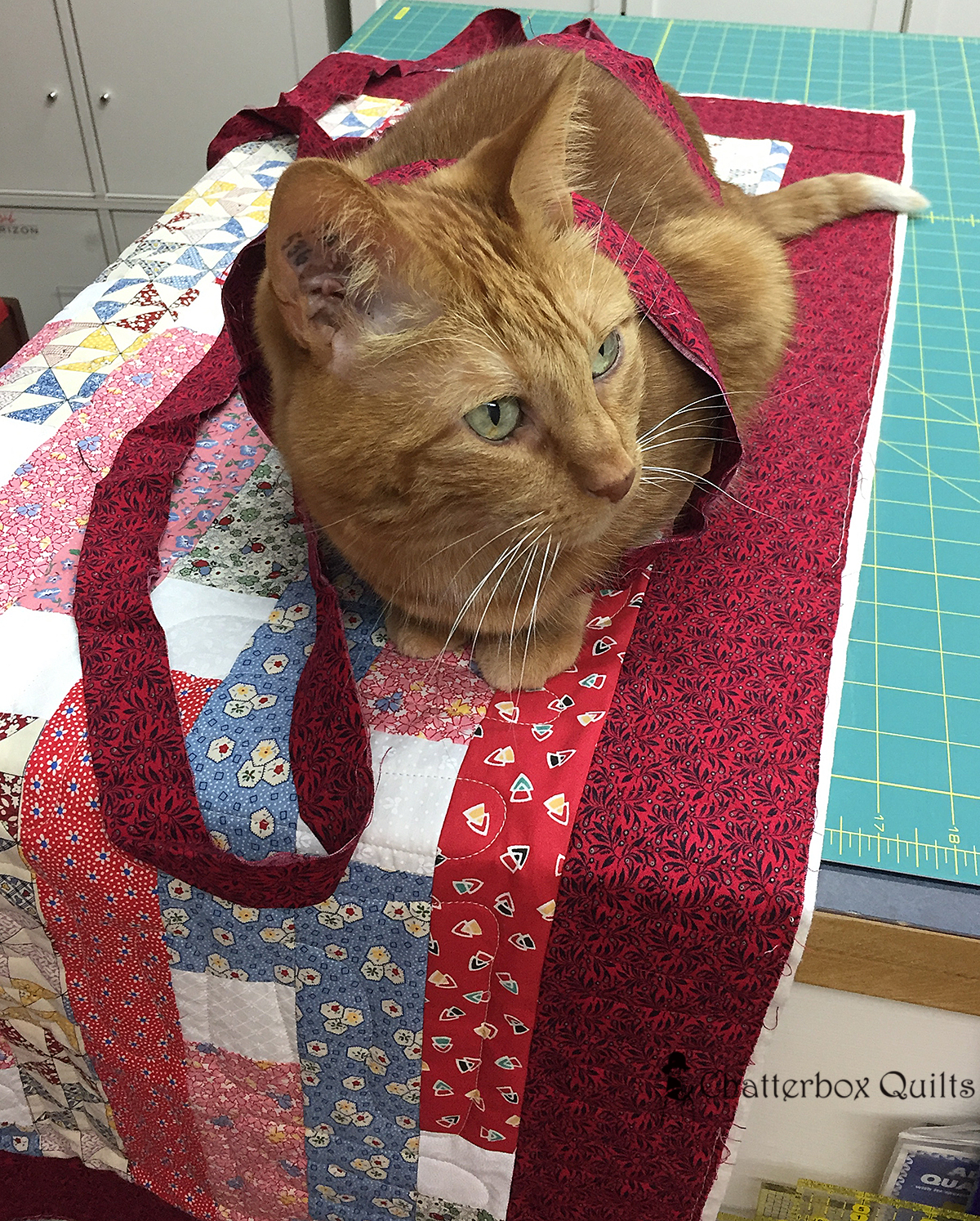 Charlie all ready to start stitching that binding onto the quilt
