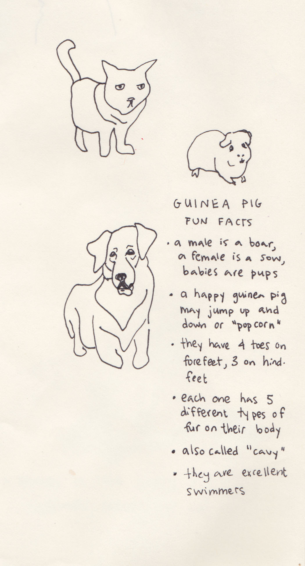 guinea pig facts.jpg