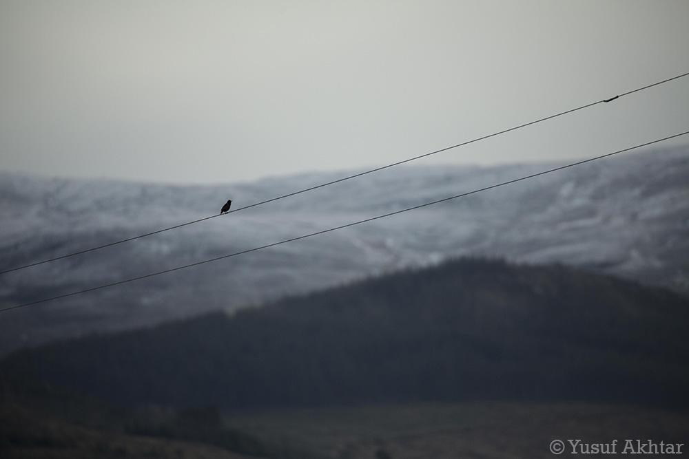 Starling 2.jpg