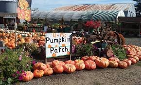 papas-pumpkin-patch-portland-pumpkin-patch