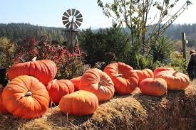 plumper-pumpkin-patch-portland-pumpkin-patch