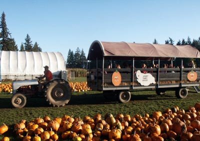 fir-point-farms-portland-pumpkin-patch