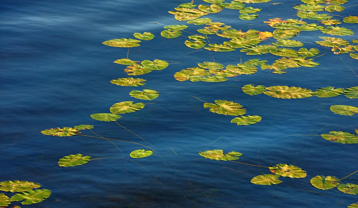 201208  leafs on water 2076 sh sRGB.jpg