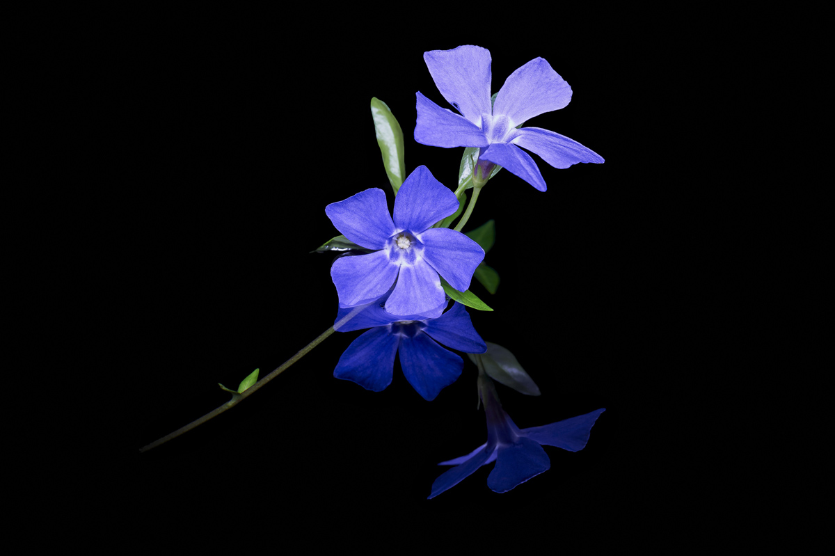 201504  blue reflection four 9437 sh sRGB.jpg