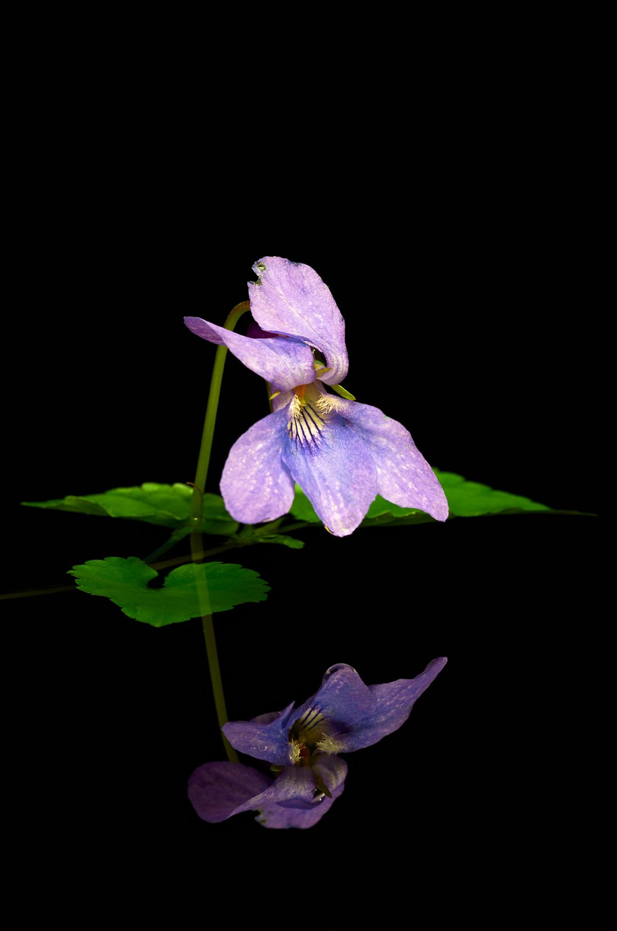201504  blue violet reflection 8115 rz rz sh sRGB.jpg