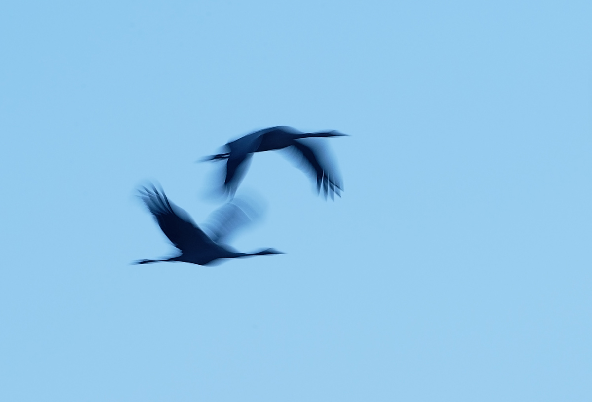 201210  crane duo in move 2810 GL rz sh sRGB.jpg