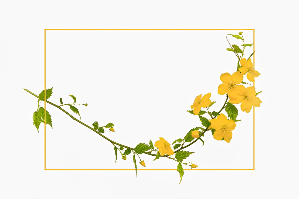 30x40-201004  Traumblueten gelb 6103 sh sRGB.jpg