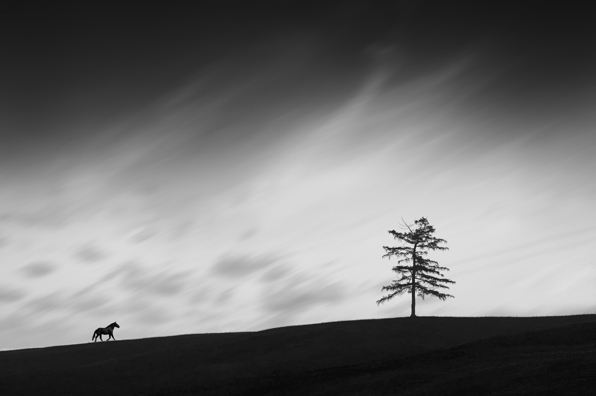 201505  black at meadow 186 M sh sRGB.jpg