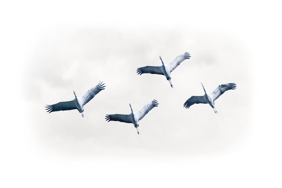 30x40  201210  crane with clauds art 1268 rz sRGB.jpg