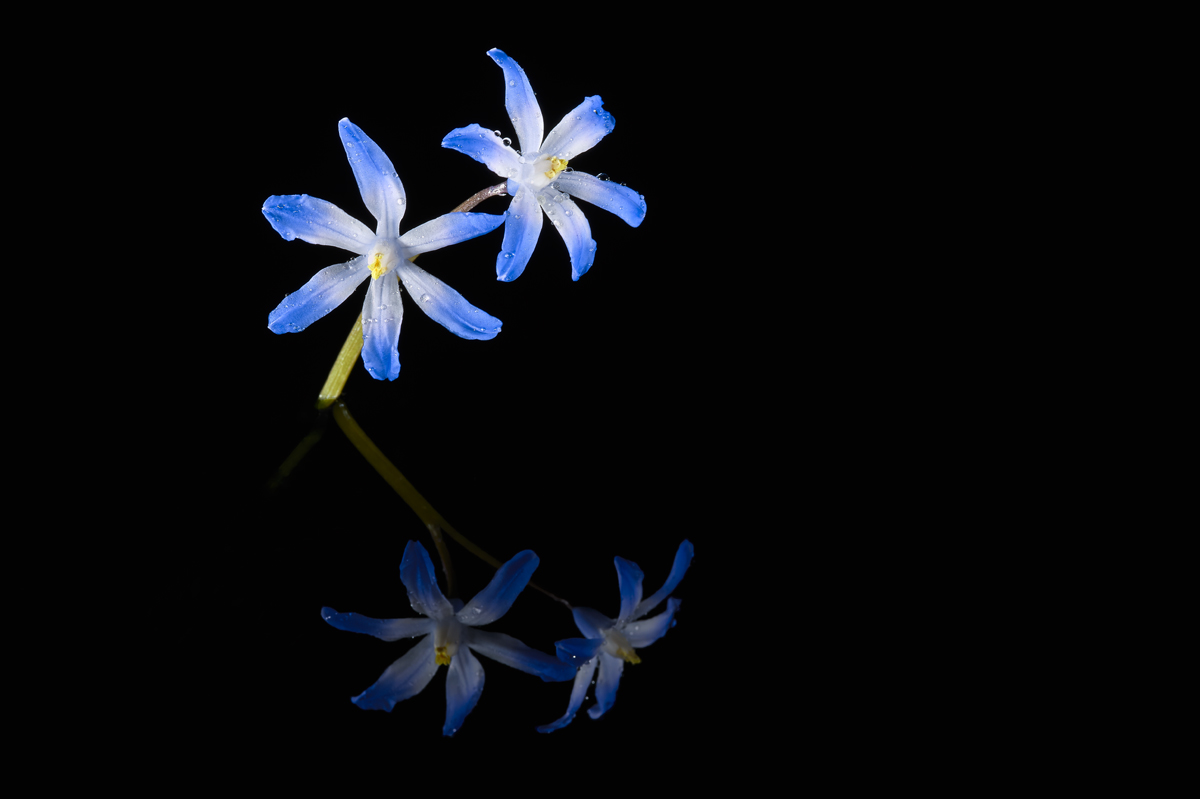 201603  two and two blue stars 6975 sh sRGB.jpg